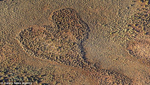 Một tác phẩm tại vùng đồng bằng nước Úc được chụp vào tháng 4 năm 2012