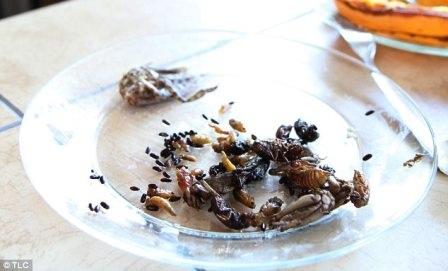 Ăn 5.000 loài côn trùng trong 11 năm