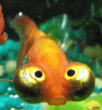 Loài cá này được phát hiện thấy ở quần đảo