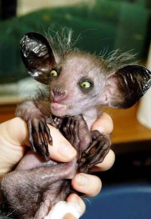 13 loài động vật xấu xí nhất hành tinh