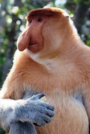 Loài khỉ này được phát hiện thấy trên hòn đảo