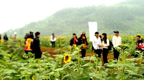 Du khách đến tham quan cánh đồng hoa ngày càng đông.