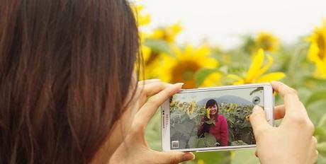 Ghi lại trong máy điện thoại những khoảnh khắc đẹp ở trên cánh đồng hoa hướng dương.