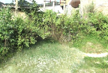 Tranh thủ ở những góc cây rậm, bờ bụi công ty này cho xả nước thải thoải mái.