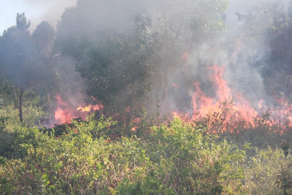 Do thời tiết nắng nóng, đám cháy nhanh chóng lan rộng sang nhiều rừng thông khác.