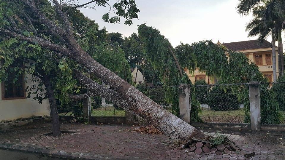 Lốc lớn xảy ra làm cây lớn ở Khu bảo tồn Thiên nhiên quốc gia Pù Huống.