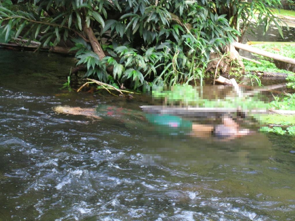 Thi thể chị Lê Thị Yến cùng con trai 8 tháng tuổi được phát hiện nổi lên ở suối.