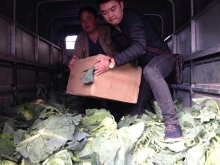 Hơn 1 tạ pháo nổ được ngụy trang dưới rau bắp cải, xu hào để vận chuyện về Hà Nội