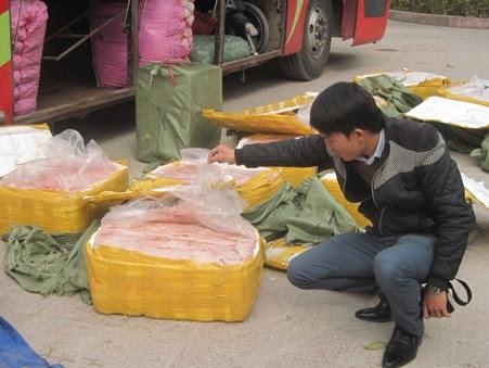 Sản phẩm động vật bẩn được để chung với nhiều loại hàng hóa khác