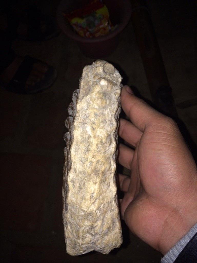 Theo các chuyên gia, đây là mẫu răng voi hóa thạch.