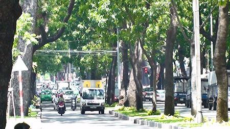 Hàng cây rợp bóng mát trên đường Tôn Đức Thắng, quận 1