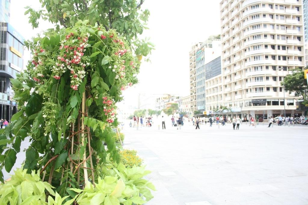 Nhiều bồn hoa di động được tăng cường để tăng mỹ quan và phủ thêm mảng xanh
