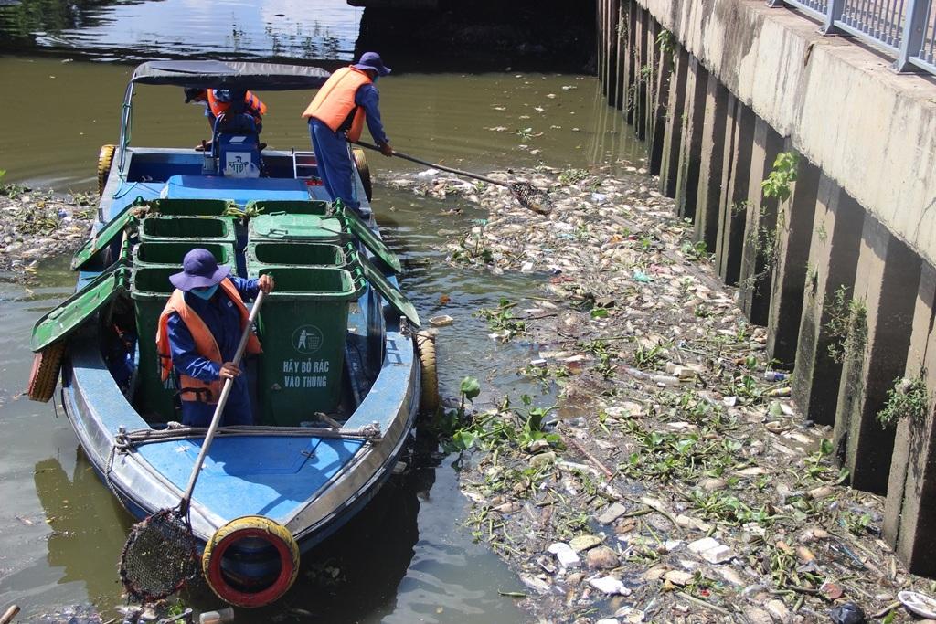 Nhân viên môi trường vớt cá mang đi tiêu hủy (Ảnh: Đình Thảo)