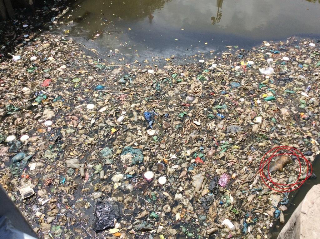 Rác thải, xác chết động vật bốc mùi hôi thối ngay tại đầu kênh (quận Tân Bình) (ảnh chụp sáng 2/6)