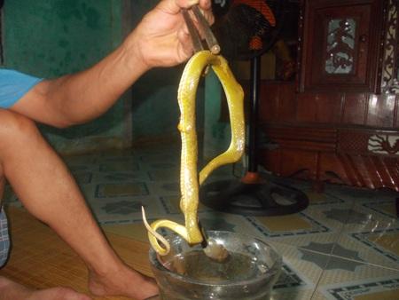 Bắt rắn ngâm rượu