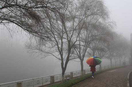 Hàng cây bờ hồ trong làn sương mờ ảo