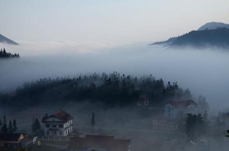 Đồi thông trong sương!