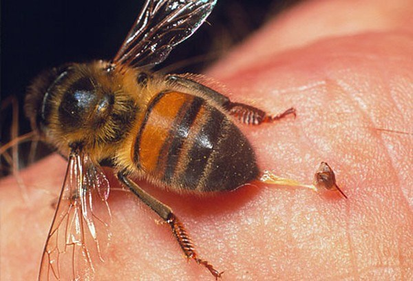 """UBND huyện họp khẩn để tiêu diệt bầy ong """"giết người"""""""