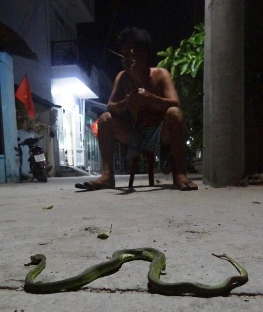 Một con rắn lục bị người dân đập chết ở quận 12, TPHCM