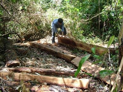 Hiện trường một vụ phá rừng ở Khánh Sơn.