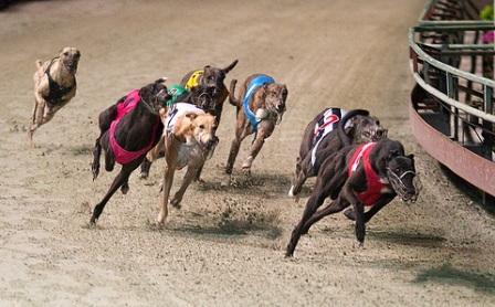 Giải đua chó chuyên nghiệp lần đầu được tổ chức tại Việt Nam | Báo ...