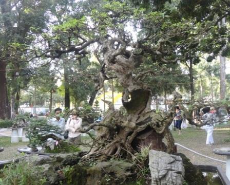 Và nhiều cây kiểng kiểu dáng độc đáo khác tụ hội tại Hội Hoa Xuân Quý Tỵ
