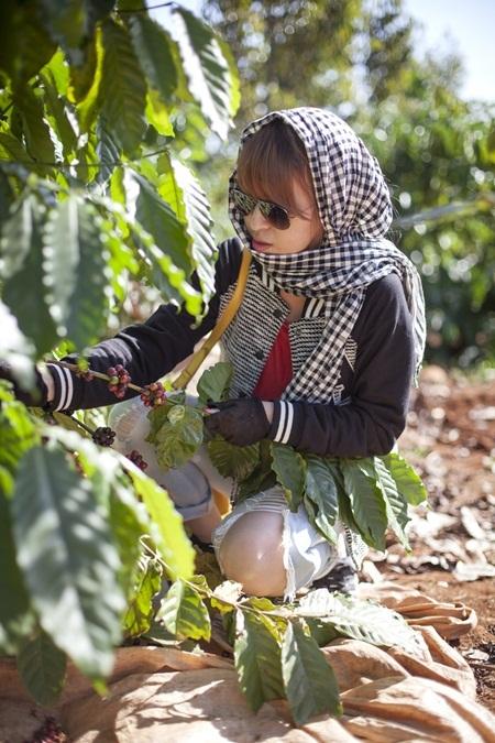 Thăm vườn cà phê đang mùa thu hoạch