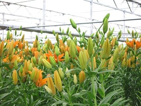Hội chợ hoa xuân Gia Lâm - Điểm đến lý tưởng cho người trồng và chơi hoa