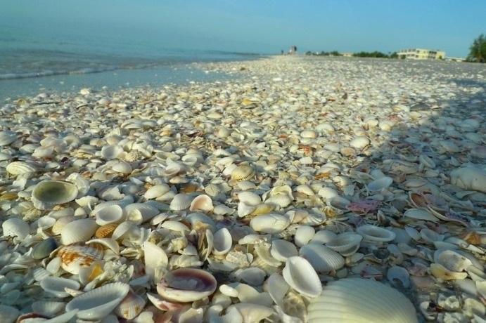 3. Bãi biển Vỏ Sò ở Saint Barthélemy: