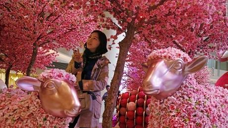 Một người phụ nữ Hồng Kông đứng giữa hội hoa chào xuẩn Ất Mùi. (Ảnh: