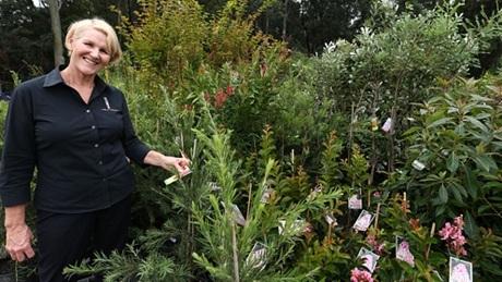 Chính quyền thành phố Sydney sẽ tặng 1.000 cây giống cho người dân trồng khắp thành phố. (Ảnh: