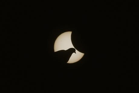 Một chú chim bồ câu lọt vào ống kính chụp cảnh tượng nhật thực tại Munich, Đức. (Ảnh: