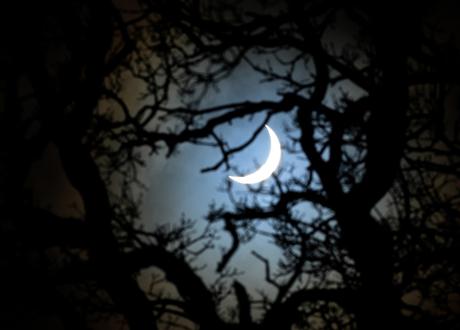 Một hình ảnh nhật thực được chụp dưới tán cây tại vùng Yorkshire, nước Anh. (Ảnh: