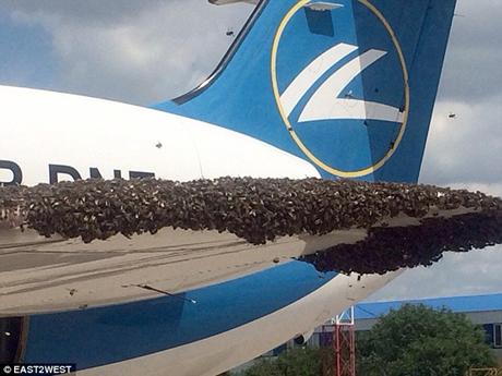 Những con ong bu kín cánh máy bay Nga.