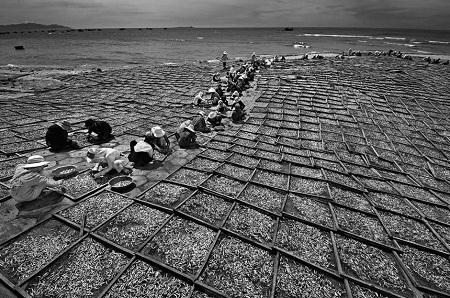 """""""Mùa cá đối"""" - Ngô Quang Phúc"""