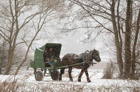 Belarus: Một người đàn ông đánh xe ngựa dưới trời tuyết rơi.