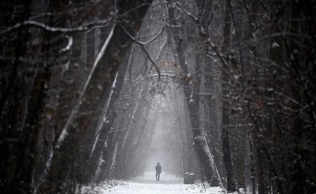 Bulgaria: Một người đàn ông đi bộ trong rừng giữa ngày tuyết rơi.