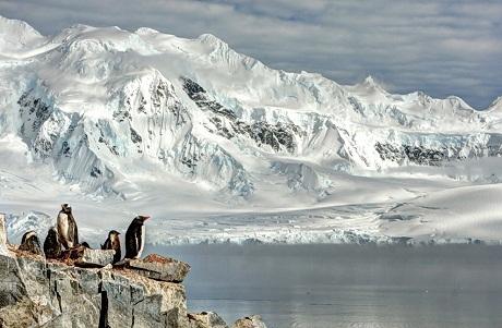 Thế giới tự nhiên – Gia đình chim cánh cụt ở Nam Cực.
