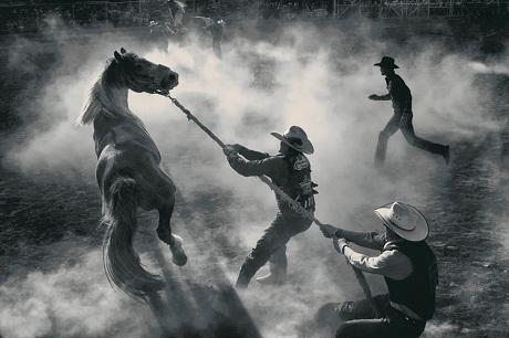 Nước Mỹ – Tại một chợ bán ngựa ở thành phố Miles, bang Montana, Mỹ.