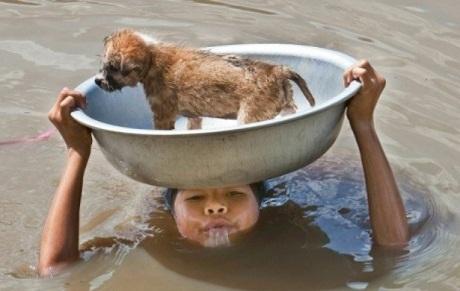Giải cứu chú chó nhỏ.