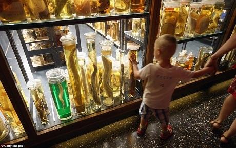 Một cậu bé đang nhìn những chú cá chình