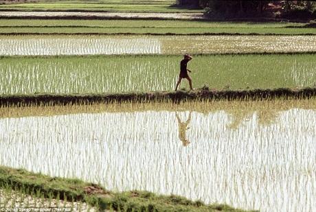 Những bức hình chưa từng công bố về chiến tranh Việt Nam
