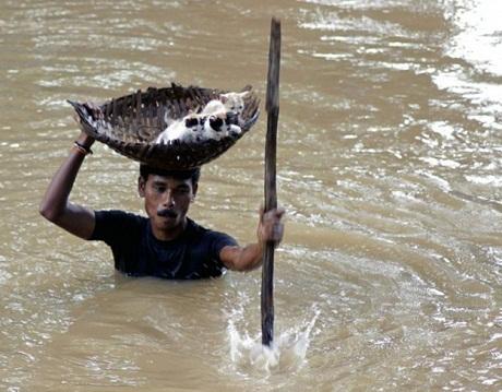 Một người đàn ông Ấn Độ giải cứu những chú mèo con khỏi vùng nước lũ.