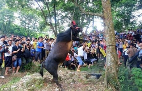 """Báo Anh viết về nghi lễ """"treo cổ bò"""" kinh dị ở Trung Quốc"""