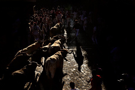 Những chú bò tót chạy dưới nắng đuổi theo những du khách tham gia vào cuộc chạy đua.