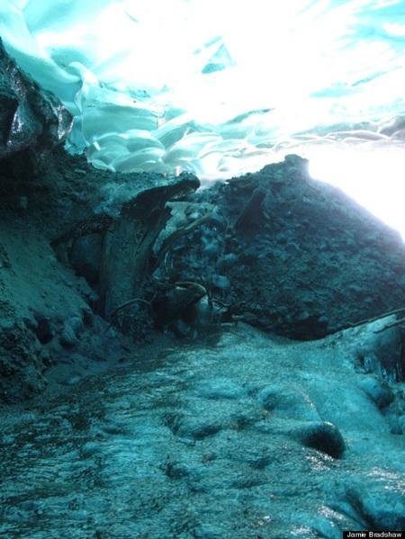 Những gốc cây xuất hiện khi sông băng Mendenhall tan chảy từ gần 50 năm nay.