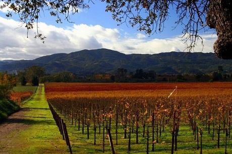 Thung lũng Napa, bang California, Mỹ