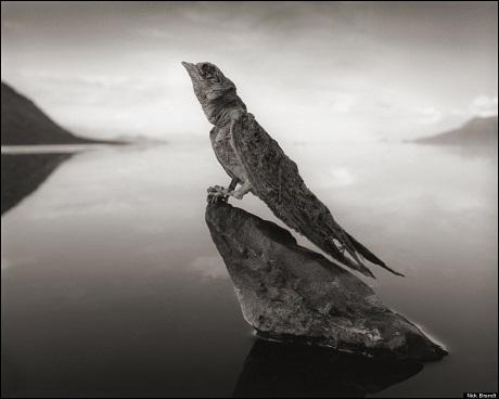 Một chú chim nhạn