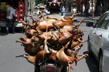 Báo Anh sửng sốt trước những lò thịt chó ở Việt Nam