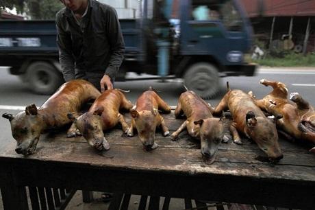 Chiếc xe tải chở khoảng 130 chú chó. Điểm dừng chân của chúng sẽ là ở những lò giết mổ.